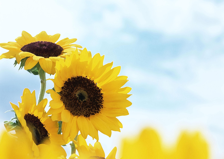 flower-back1452